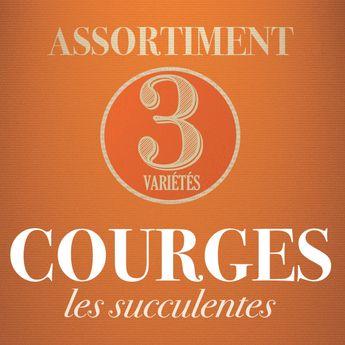 ASSORTIMENT DE COURGES : LES SUCCULENTES
