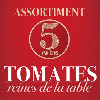 ASSORTIMENT DE TOMATES REINES DE LA TABLE