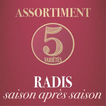 ASSORTIMENT DE RADIS : SAISON APRES SAISON