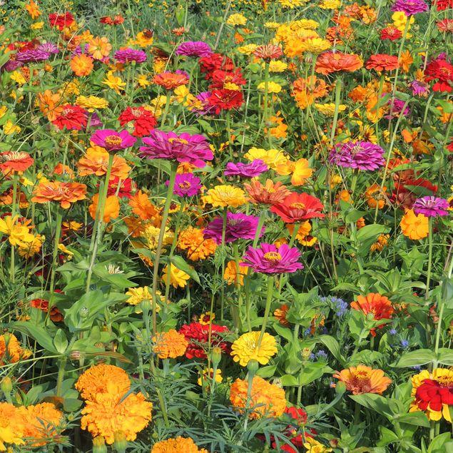 MELANGE FLEURI - PLANTES TINCTORIALES  NT 25 g