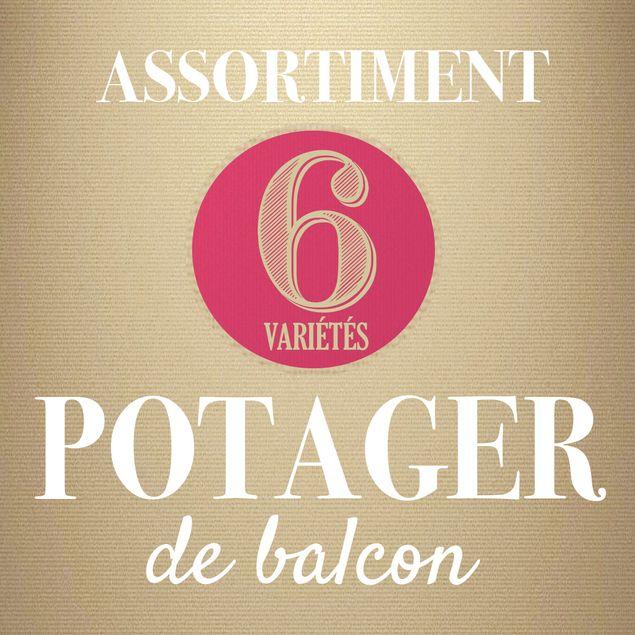 ASSORTIMENT POTAGER DE BALCON