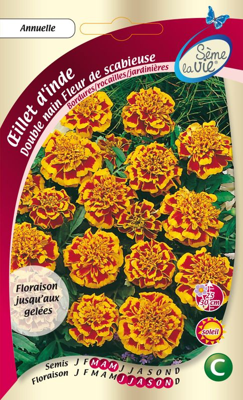 oeillet d inde double nain fleur de scabieuse orange flamme nt ferme de sainte marthe. Black Bedroom Furniture Sets. Home Design Ideas